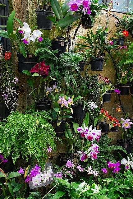Longwood Gardens - Orchid Room by Steve_Logan, via Flickr