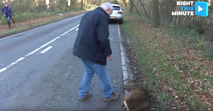 Man Releases Deer Into The Wild After Emotional Rescue via LittleThings.com