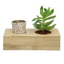 Plant For Decoration