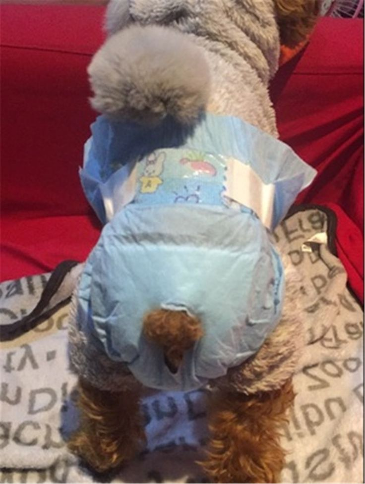 Details about Disposable Dog Diapers Female Male Dogs