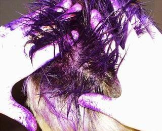 Homemade Temporary Hair Color for Kids (with Pictures)   eHow
