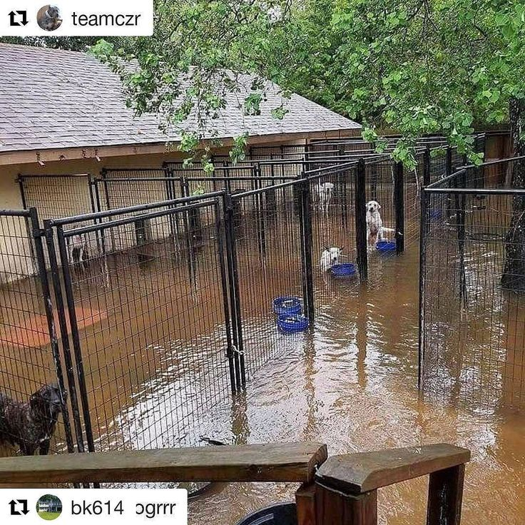 #Repost @bk614  #Repost @teamczr (@get_repost)  DONATIONS ARE STILL DESPERATELY NEEDED!!! #Repost @dallasdogrrr   9 1 1  We are in serious need of help!  They opened the dam north of us and we got over a foot of water overnight...and it's still rising!  They're going to release more water from upstream and more rain is on the horizon.  We've got to go and we've got to go now!  We won't leave the dogs so need help getting them out by boat.  We need temporary places for them to stay as well…