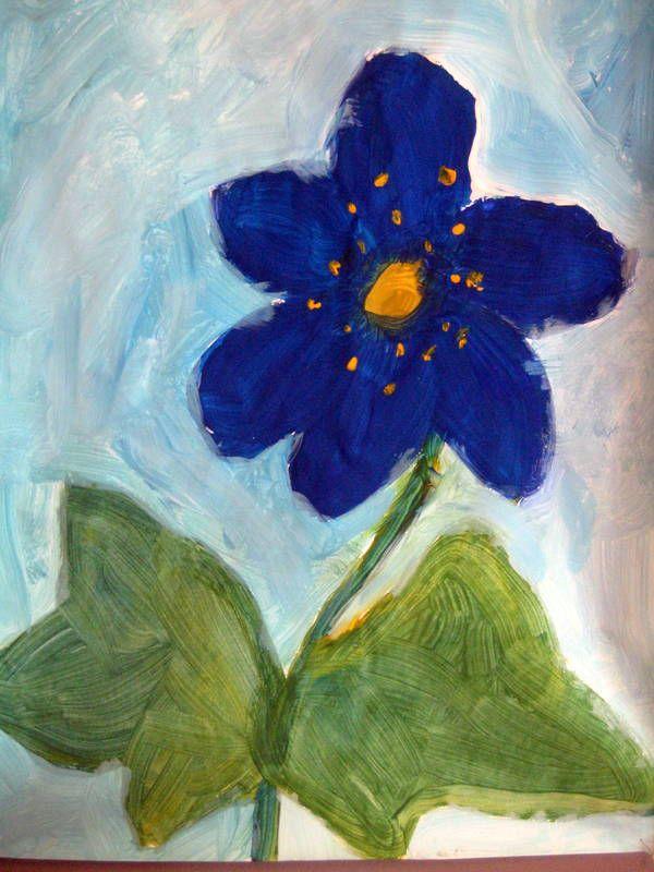 sinivuokko