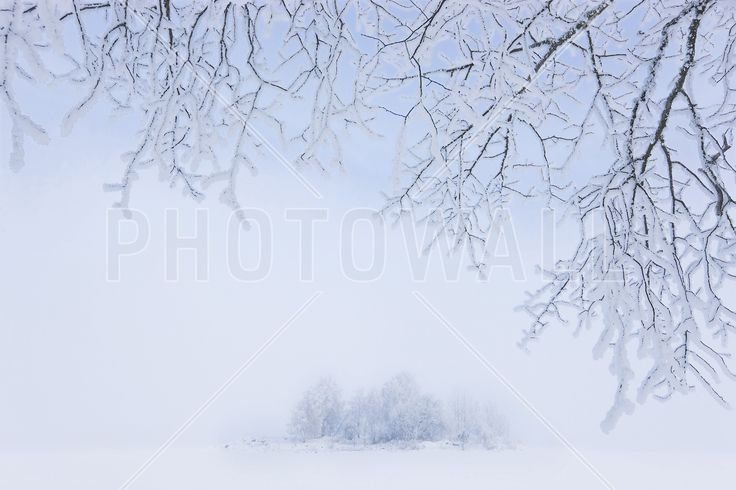 Foggy Winter - Fototapeter & Tapeter - Photowall