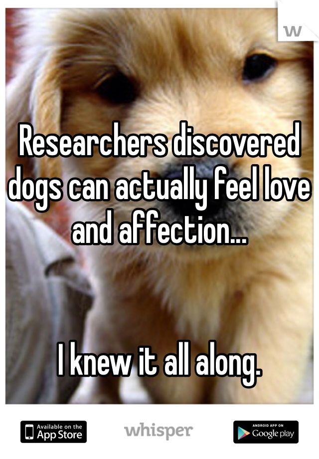 Researchers discovered dogs can actually feel love and affection...   I knew it all along.