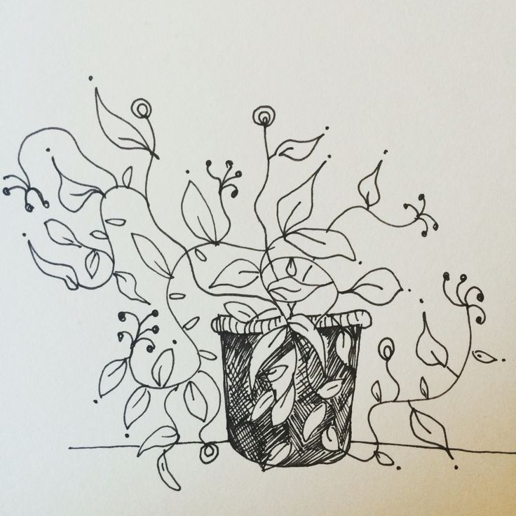 Plant. Drawing