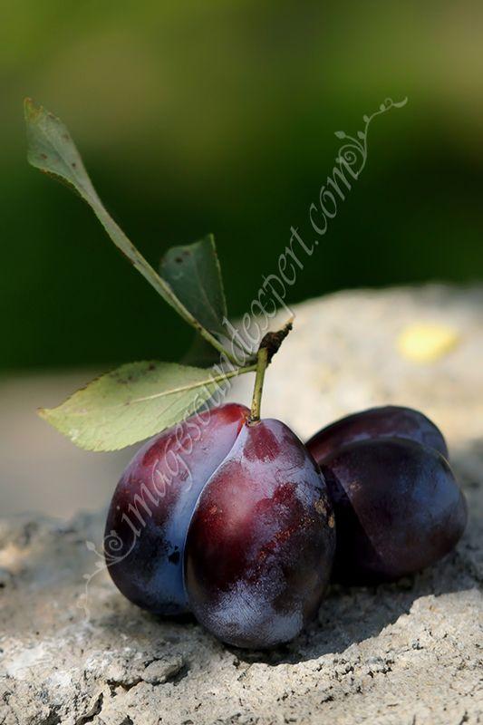 end of summer, sfarsit de vara, prune