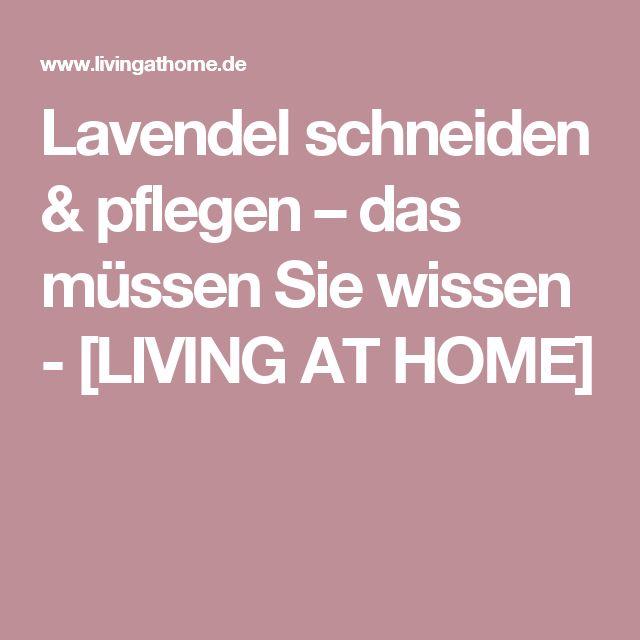 Lavendel schneiden & pflegen – das müssen Sie wissen - [LIVING AT HOME]