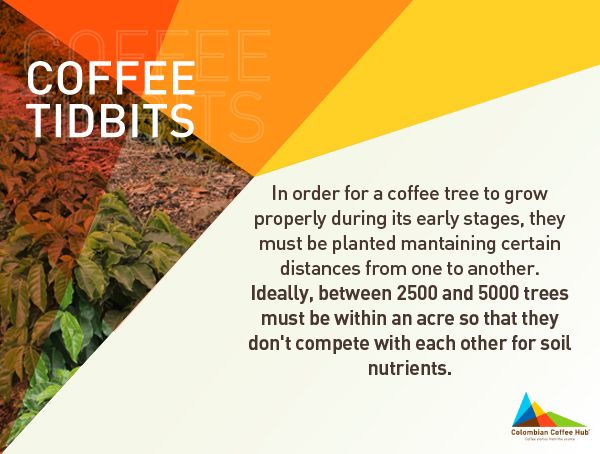 Join us at www.colombiancoffeehub.com and get more coffee info.