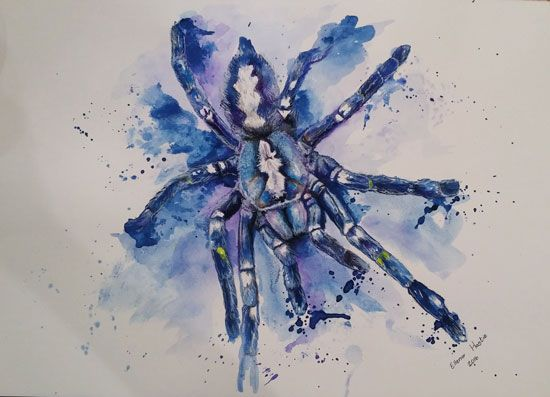 Tarantula - Pen and Watercolor on Paper. Artist: Ellenor Hastie