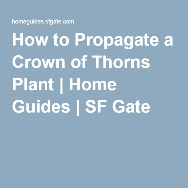 How to Propagate a Crown of Thorns Plant | Home Guides | SF Gate
