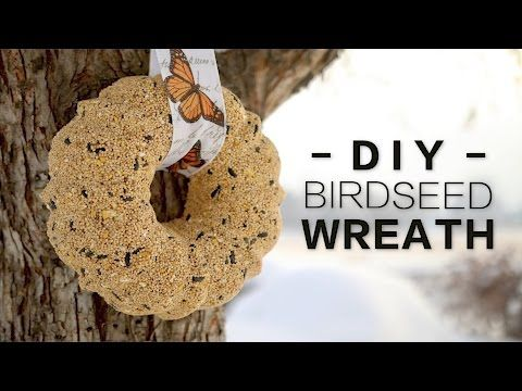DIY Birdseed Wreath // Garden Answer - YouTube