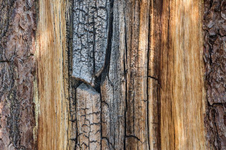 Amanti del legno