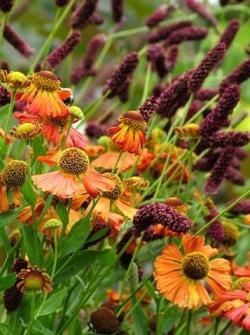 find this pin and more on helenium