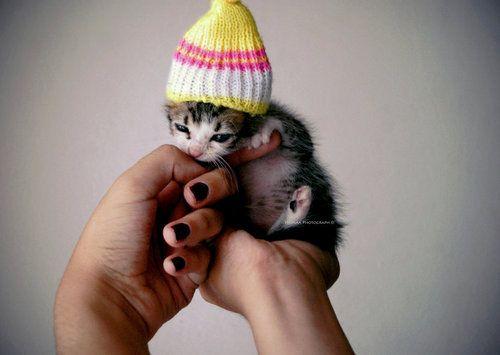 itteh bitteh kitteh in a hat