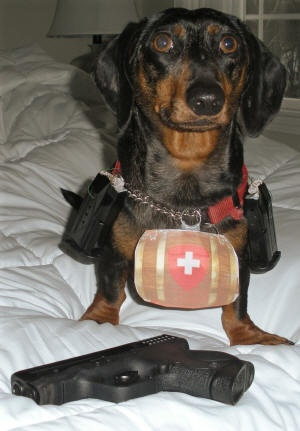 Rocky is a very brave miniature dachshund rescue dog.