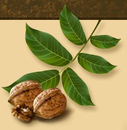 Walnuts are one of the most beneficial plant origins of protein. They are rich in fiber, B vitamins, magnesium, and antioxidants such as Vitamin E. Nuts in general are also high in plant sterols and fat – but mostly monounsaturated and polyunsaturated fats (omega 3 fatty acids, in particular, alpha-linolenic acid ALA) that have been shown to lower LDL cholesterol. Walnuts, indeed, have significantly higher amounts of ALA omega 3 fatty acids compared to other nuts.