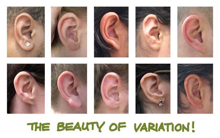Anatomi Kulak / Anatomy Ears | Find us on > https://www.facebook.com/maviturta , https://instagram.com/maviturta/ , https://twitter.com/maviturta , https://www.facebook.com/groups/maviturta/ #Anatomi #anatomy #kulak #ears #drawing #design #sketch #sketching #character #digital #digitalpainting