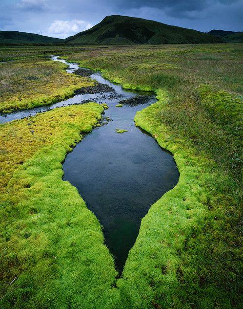 Iceland moss 2 by David Ward. Near Landmannalaugar, Iceland.