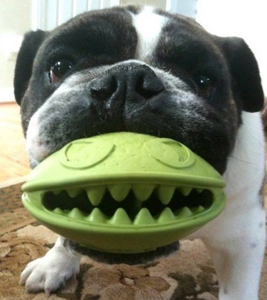 Monster Mouth Dog Treat Toy - $9