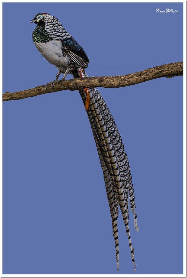 Esperance Bird & Animal Park