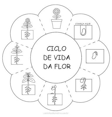 Atividade do Ciclo de Vida da Flor Para Imprimir - Blog Cantinho Alternativo