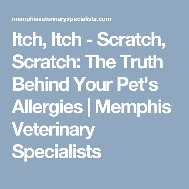 Itch, Itch - Scratch, Scratch: The Truth Behind Your Pet's Allergies   Memphis Veterinary Specialists