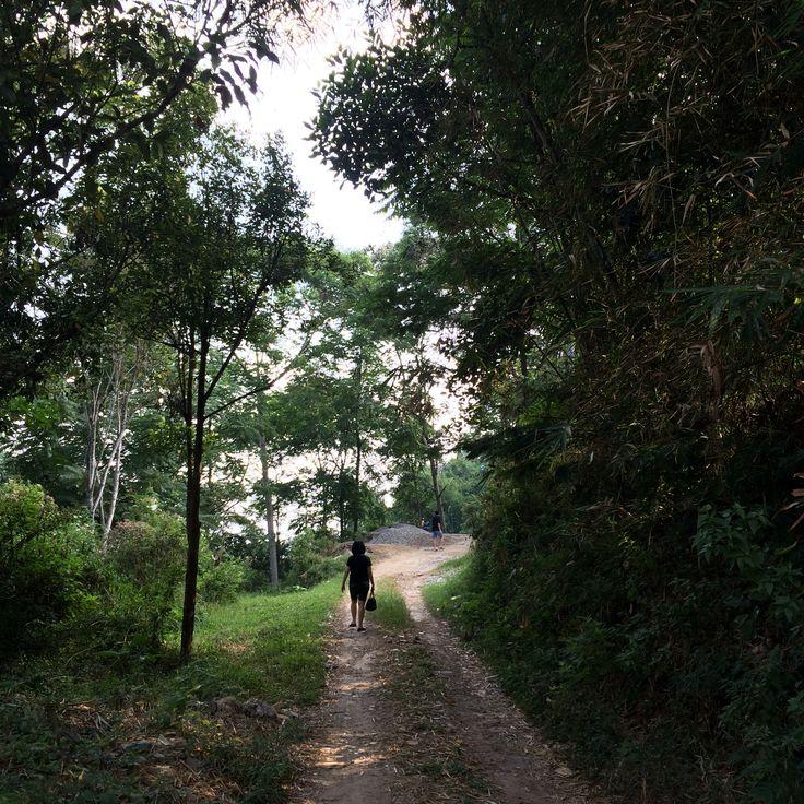 Forest _ Lawang Wangi
