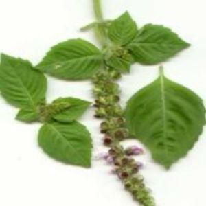 Medicinal Benefits Of Basil Herb - Different Types Of Basil Leaves & Benefits Of Various Types Of Basil | Home Remedies, Natural Remedy
