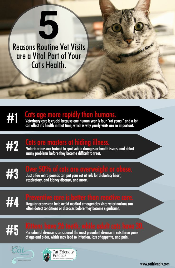 National Take Your Cat To The Vet Day The Cat Community Cat2netday Vet Visits Cat Health Vets