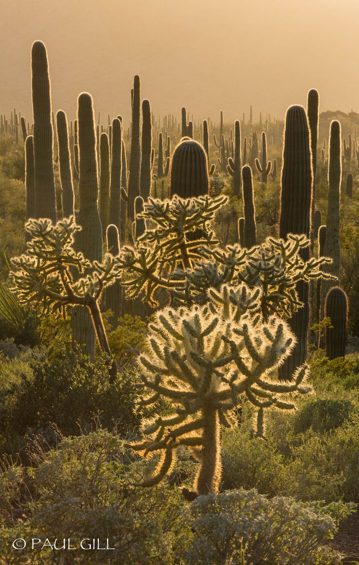 Organ Pipe Cactus, New Mexico                                                                                                                                                                                 More