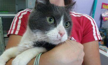 El Gato Andaluz es una asociación protectora de animales dedicada a la ayuda de gatos abandonados y callejeros, maltratados, enfermos y/o accidentados.