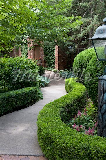 GARDEN: Low shaped hedge of boxwoods line a curving ...