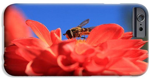 Flowers Fly On Dahlia 1 IPhone 6s Case for Sale by Sverre Andreas Fekjan…