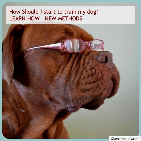 Become The Pack Leader Cat Illnesses Dogs Dog Training