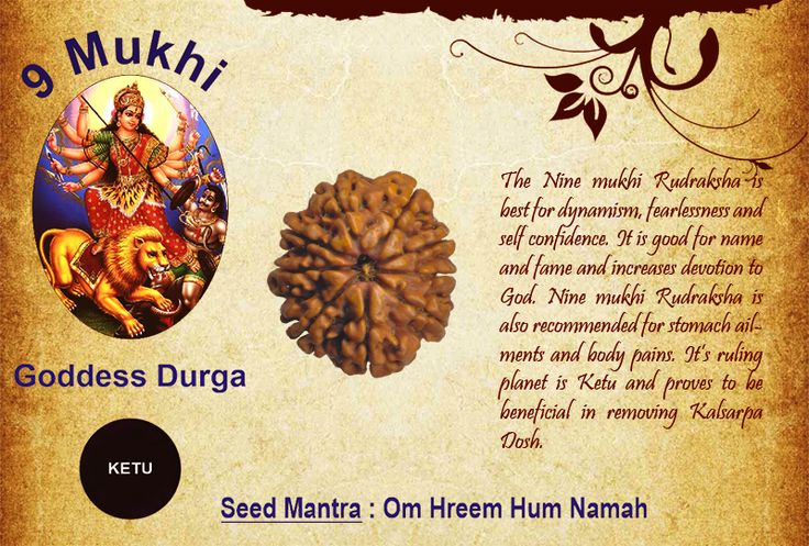Benefits of Nine Mukhi Rudraksha Goddess: Goddess Durga / Ruling Planet: Ketu The Nine mukhi Rudraksha is best for dynamism, fearlessness and self confidence. It is good for name and fame and increases devotion to God. Nine mukhi Rudraksha is also recommended for stomach ailments and body pains. It's ruling planet is Ketu and proves to be beneficial in removing Kalsarpa Dosh. http://www.rudralife.com/Rudraksha/details.php?id=16