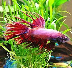 Best 25 aquarium supplies ideas on pinterest fish tank for Betta fish diet