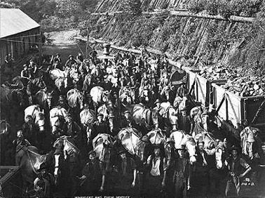 Pit Ponies and Miners in the Illawarra, c.1900, Courtesy National Library of Australia