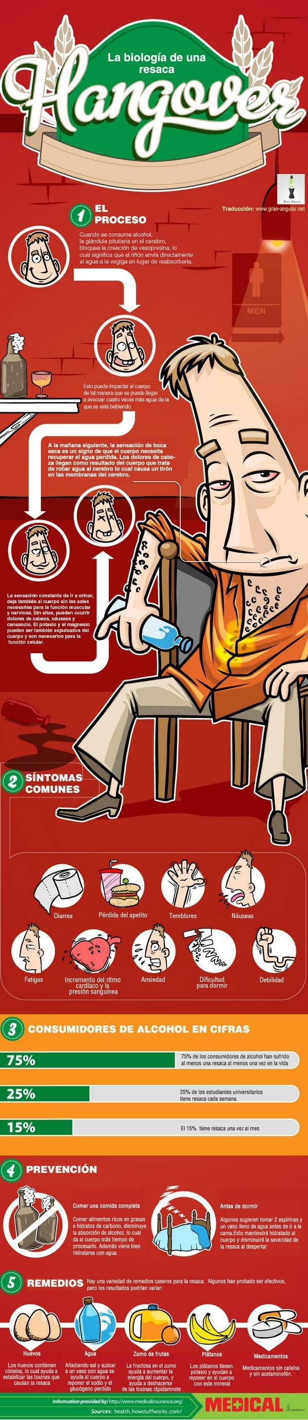 Biología de la resaca: Biología De, Hangover Infographic, Of The, The Hangover, Health, Infographics, Biology