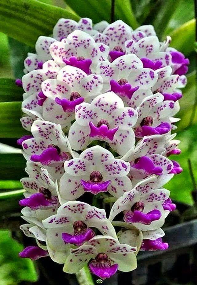 Beautiful Orchid | Backyards Click