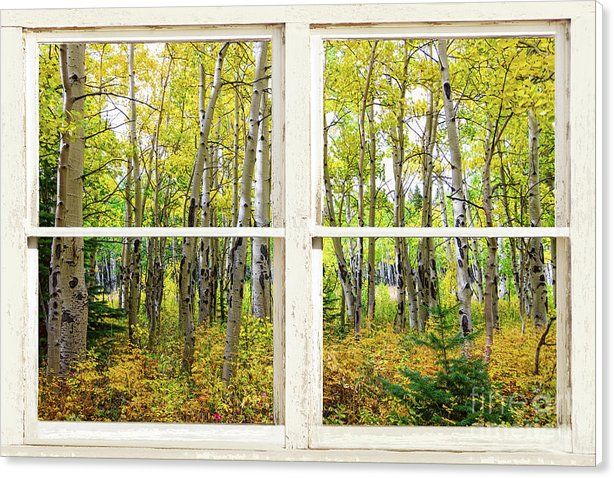 53 best Nature Windows With a View Metal Wall Art images on ...