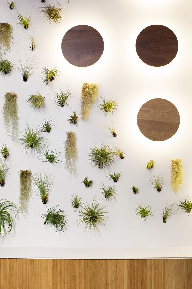 Livewall green wall system make conferences more comfortable - Green Wall Office Design Garden
