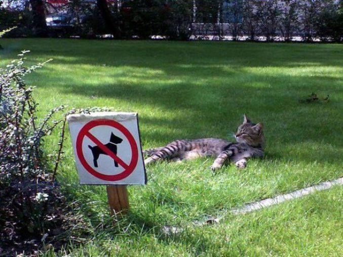 Interdit aux chiens... mais pas aux chats. Non, mais ! (photo Yann Vernerie)