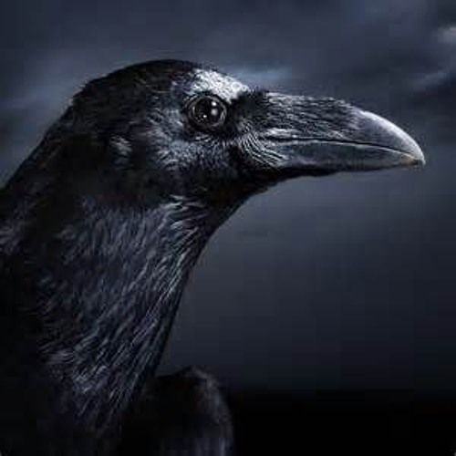 Black Crow (Colab Jerry Baker Al Wood) by A Wood on SoundCloud