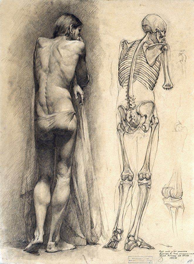 65 best Anatomy for artists images on Pinterest | Human anatomy ...