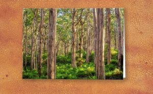 Forest Twilight, Boranup Forest Greeting Card design by Dave Catley featuring…
