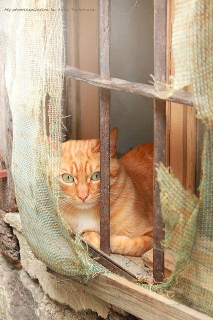 Gato. | Flickr: Intercambio de fotos