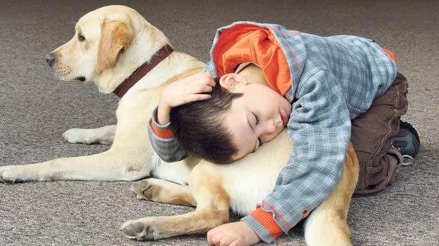 La terapia con perro para el autismo  Según un reciente estudio, la terapia con perro puede beneficiar a los pacientes con autismo. + info en click en imagen