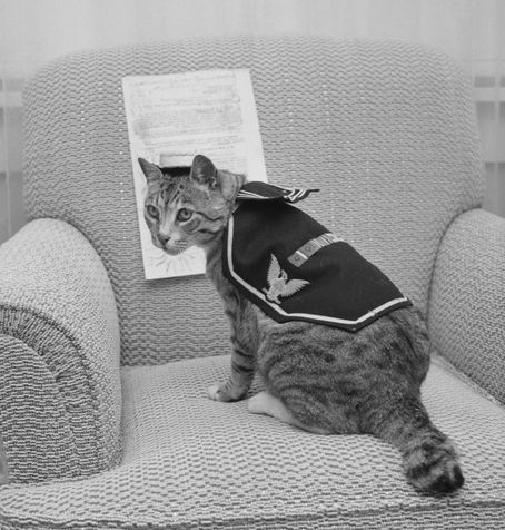 Pooli, cat who served aboard a United States attack transport during World War II celebrates 15th birthday. Pooli, who rates three service ribbons and four battle stars, shows she can still get into her old uniform as she prepares to celebrate her 15th birthday. The cat served aboard an attack transport during World War II. Publication date in Los Angeles Times, 4 July 1959.