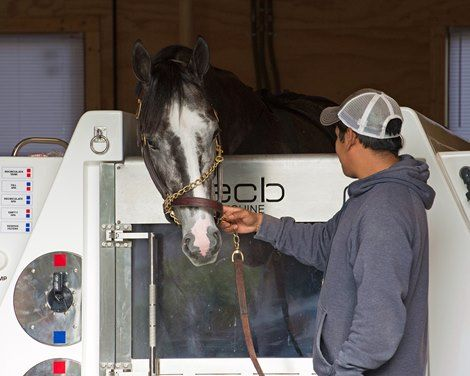 After capturing the Kentucky Derby Presented by Yum! Brands (G1) with Always Dreaming, trainer Todd Pletcher will try to close out the Triple Crown season with another classic victory when he sends out Tapwrit and Patch in the Belmont Stakes.